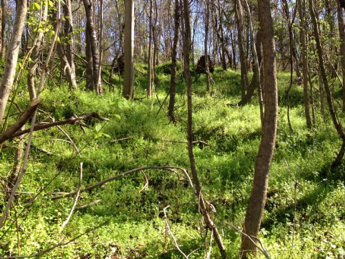 50 Ac Hunting Tract : Vicksburg : Warren County : Mississippi