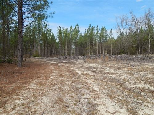 Creek Bottom & Planted Pines : Warrenton : Warren County : Georgia
