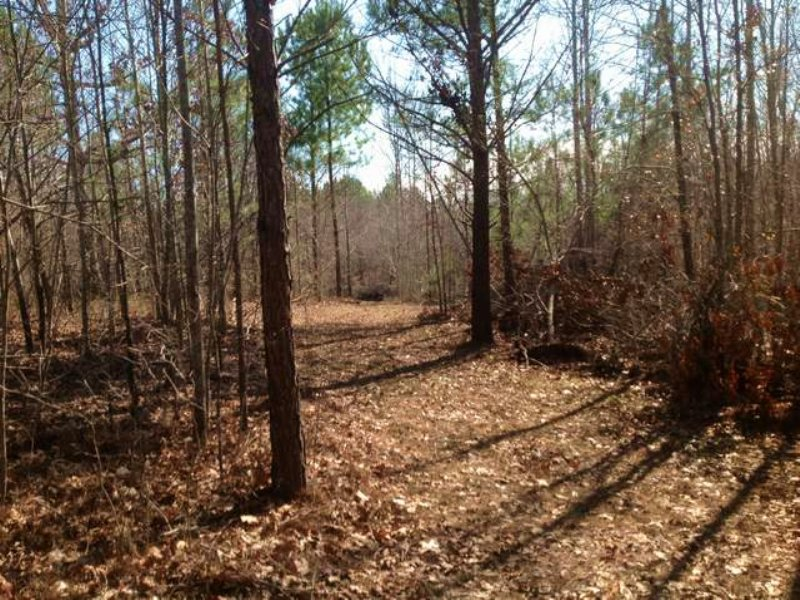 14+/- Ac Talladega Nat Forest : Sylacauga : Talladega County : Alabama