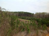 60 Acres Valley Grande : Valley Grande : Dallas County : Alabama