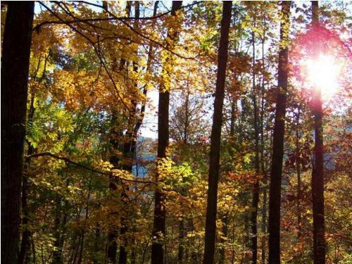 5.00+/- Acres No Restrictions : South Pittsburg : Marion County : Tennessee