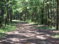 Excellent Hunting And Farm Tract : Sneads : Jackson County : Florida