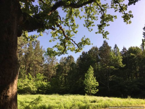 A Rare Find And Must See Property : Bogue Chitto : Lincoln County : Mississippi