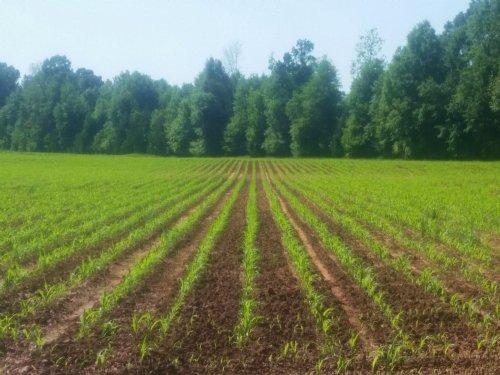 Irrigated Farm Land : Americus : Sumter County : Georgia