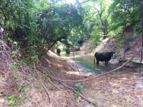 422.515 Scenic  Ranch : Stephenville : Erath County : Texas