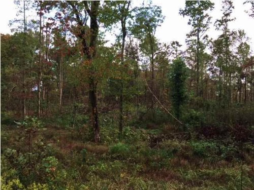 5.5+/- Acres Wooded Lot : Sequatchie : Marion County : Tennessee
