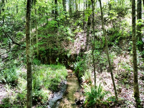 112 Acres With Cabin And Creek : Ellaville : Schley County : Georgia
