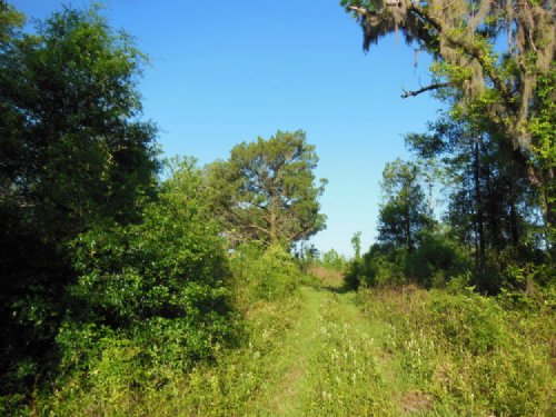 75 Acres With Highway Frontage : Lake City : Columbia County : Florida