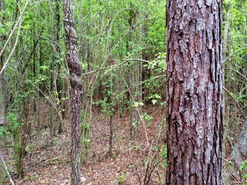 35 Acres Of Hunting Land : Sturgis : Oktibbeha County : Mississippi