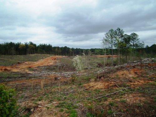 Jane Guyton : Kosciusko : Attala County : Mississippi
