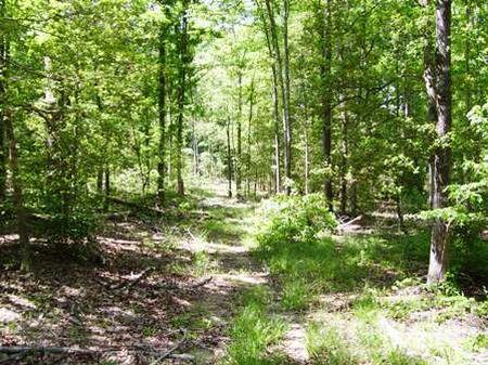 Barnett Estate #4 : Columbia : Richland County : South Carolina