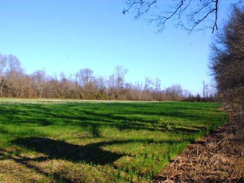Farm And Hunting Property : Holly Grove : Monroe County : Arkansas