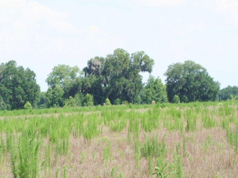 443 Acres, Alachua Fl : Alachua : Alachua County : Florida