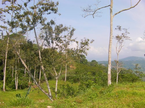 $70,000 7 Acre Mountain Farm : Turrialba : Costa Rica