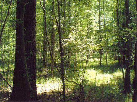 Thorntree Creek Tract : Fairfield : Fairfield County : South Carolina