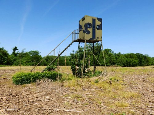 135 Acres, High Deer Density Farm : New Canton : Pike County : Illinois