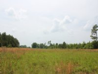 Cooley Tract