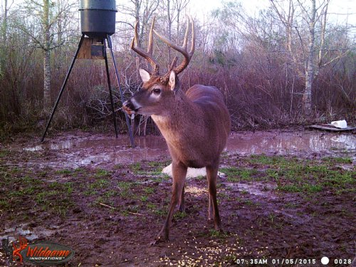 Morrow Deer Thicket : Morrow : Saint Landry Parish : Louisiana