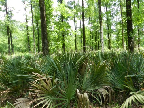 Stonewall Plantation : Waterproof : Tensas Parish : Louisiana