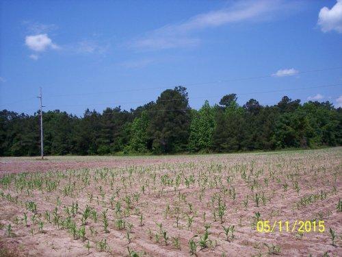 Verniel Road Tract : Elloree : Calhoun County : South Carolina