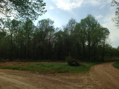 40 Ac Delta Hunting Tract : Belzoni : Humphreys County : Mississippi