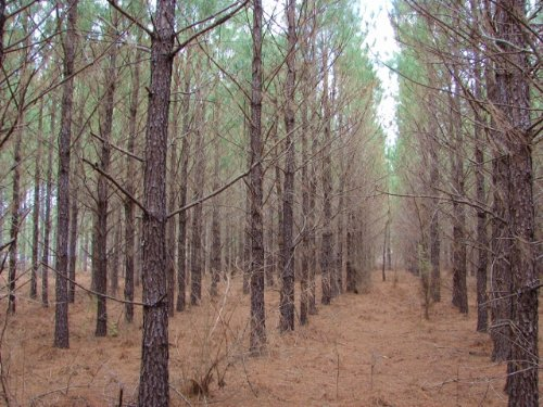 Lower Tallassee +/-54 Acres : Tallassee : Tallapoosa County : Alabama