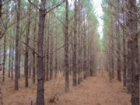 Lower Tallassee +/-54 Acres