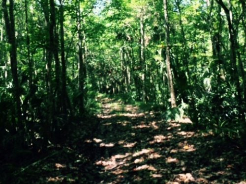 A Very Rare Opportunity : Weeki Wachee : Hernando County : Florida