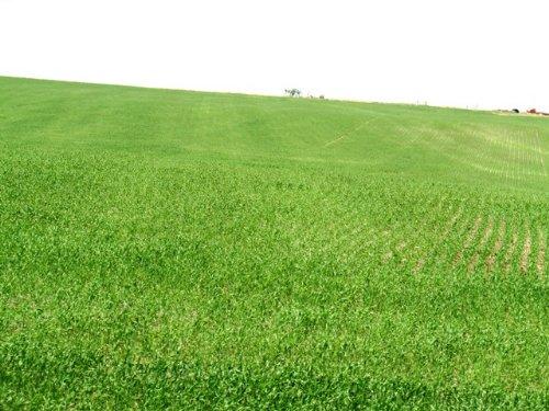 1,353 Acres Crop, Hay & Grass Land : Ree Heights : Hand County : South Dakota