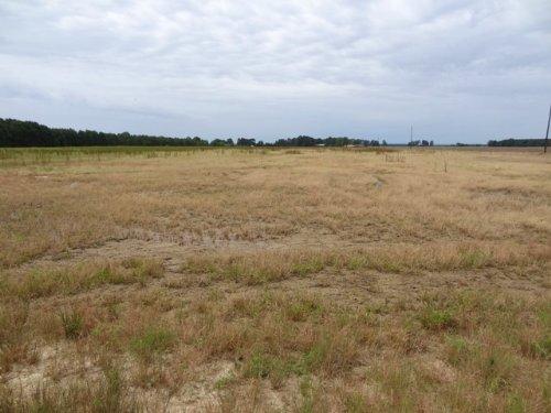 New Price Farm & Timber Land : Mccrory : Woodruff County : Arkansas
