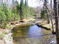 Lemon Stream Forest