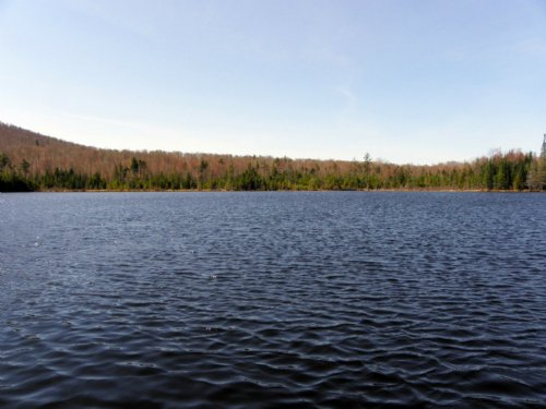 East Pond Forest : Tupper Lake : Franklin County : New York