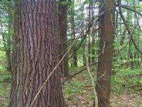 Western Adirondack Woodlands