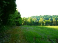 36 Acres With Crop Ground
