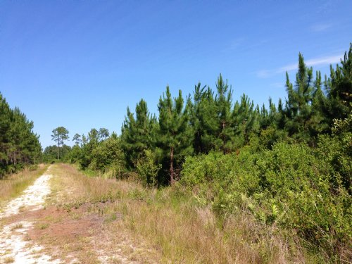 1528 Acres Timberland, Recreation : Homerville : Clinch County : Georgia