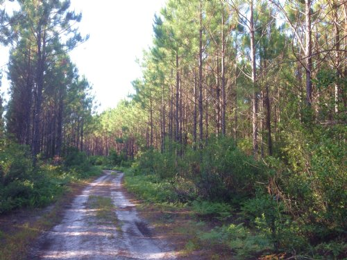 228 Ac Scrub Island Rec & Timber : Waycross : Ware County : Georgia