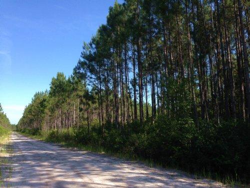 1220 Ac Gainey Island Plantation : Waycross : Ware County : Georgia