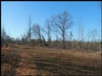 240 Acres Hunting Land, Recreation