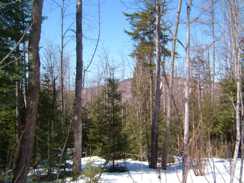 Halibut Mountain Forest : Guildhall : Essex County : Vermont