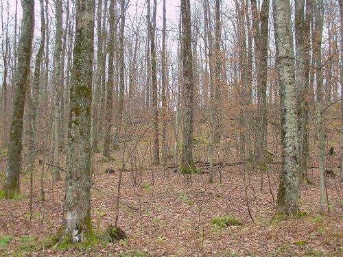 Richford Forest : Richford : Franklin County : Vermont
