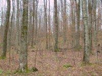 Richford Forest