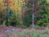 210+/- Acres Of Wooded Land : Shickshinny : Luzerne County : Pennsylvania