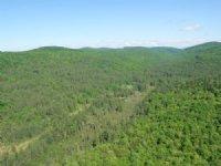 Bear Notch Forest
