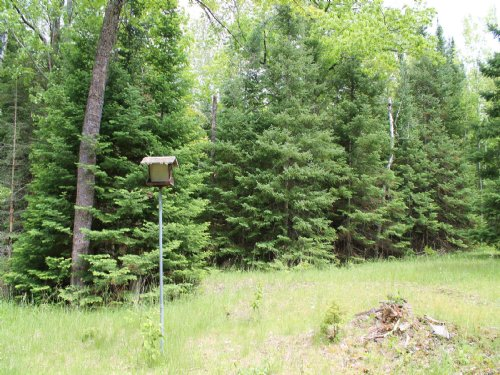 Awesome Hunting Property : Atlanta : Montmorency County : Michigan