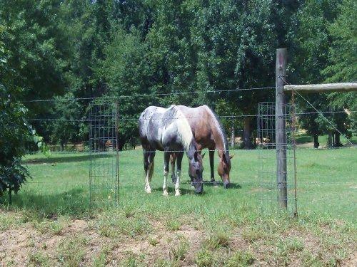 Barnes Mountain Farms - 5.70 Acre Lot : Monticello : Jasper County : Georgia