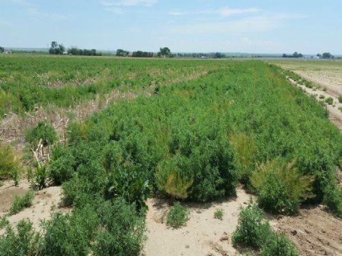 49.9 Acres Irrigated Farm : La Junta : Otero County : Colorado