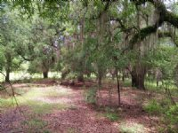 Great Recreational Tract And Timber