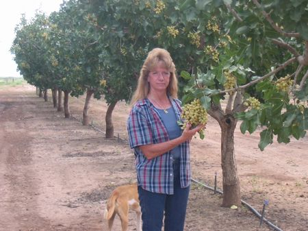 Pistachio Pecan Farm Farm For Sale By Owner In Alamogordo Otero County New Mexico 9230 Farmflip