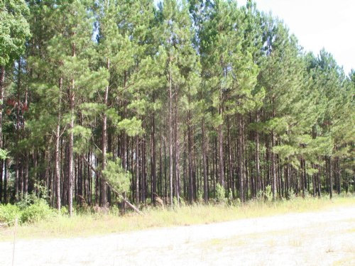 10.37 Acres, Reserve At Deer Run : Callahan : Nassau County : Florida