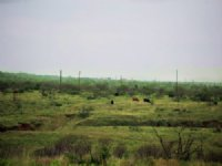 5440 Acre Tx Cattle / Hunting Ranch
